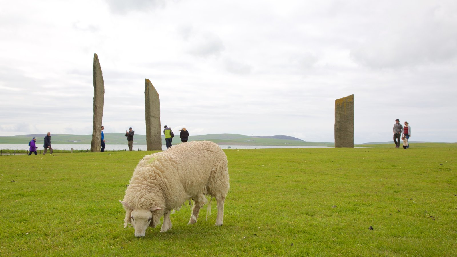 Standing Stones of Stenness featuring heritage elements, land animals and tranquil scenes