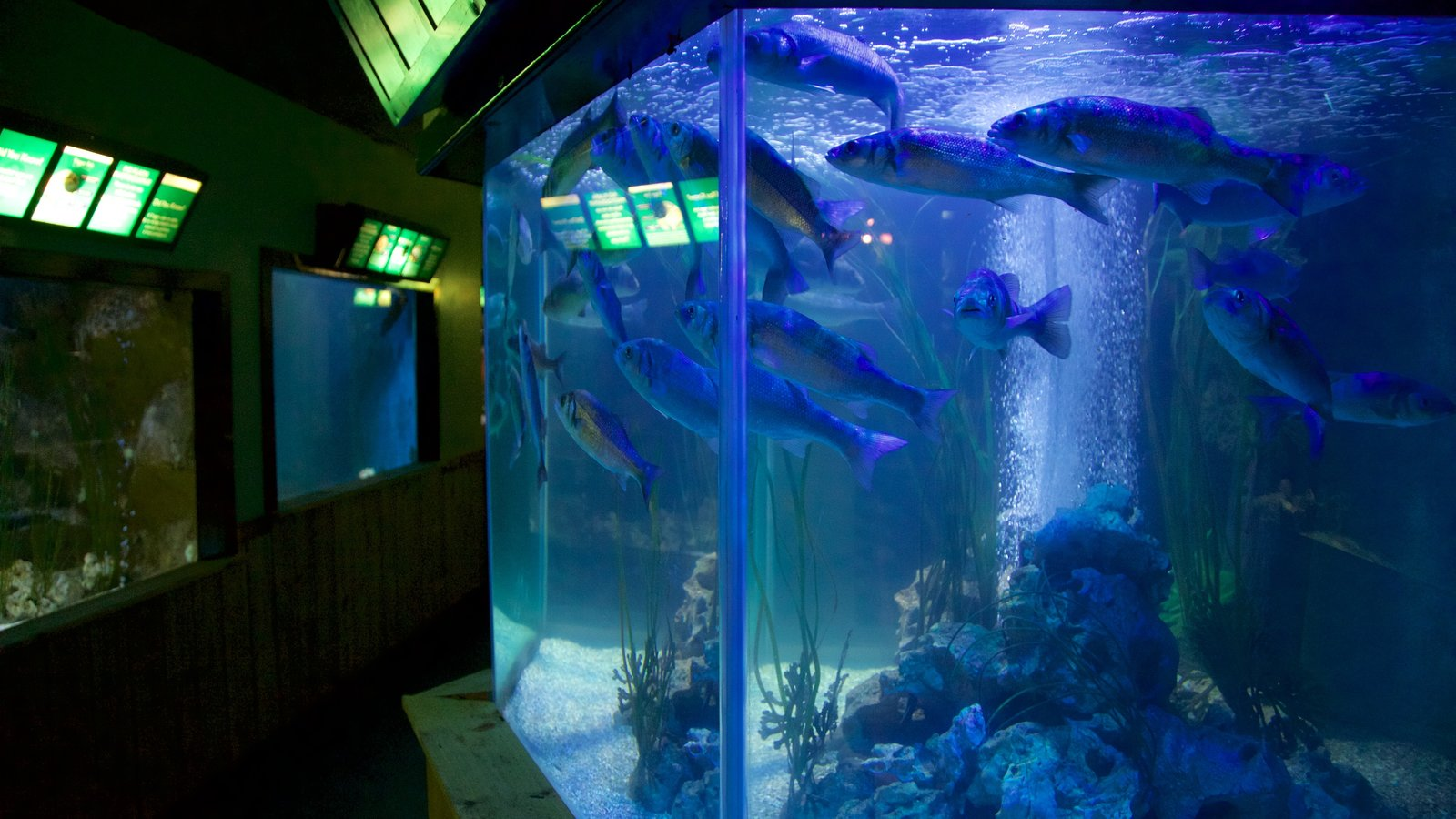 Scottish Sealife Sanctuary which includes marine life and zoo animals