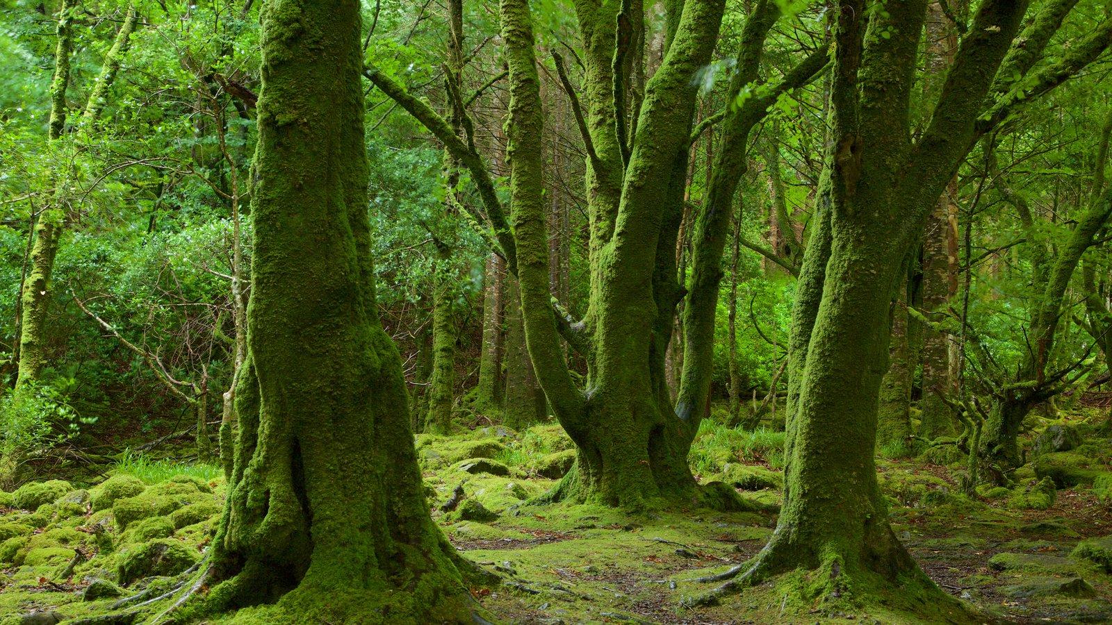 Cascada de Torc mostrando escenas forestales