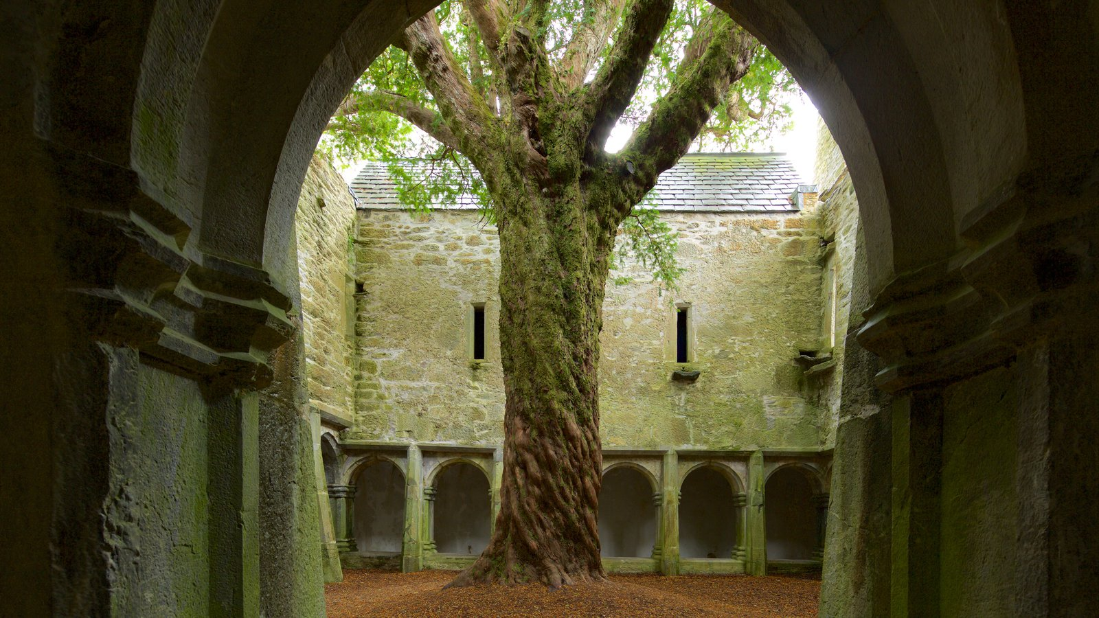 Muckross Abbey showing heritage elements, heritage architecture and chateau or palace