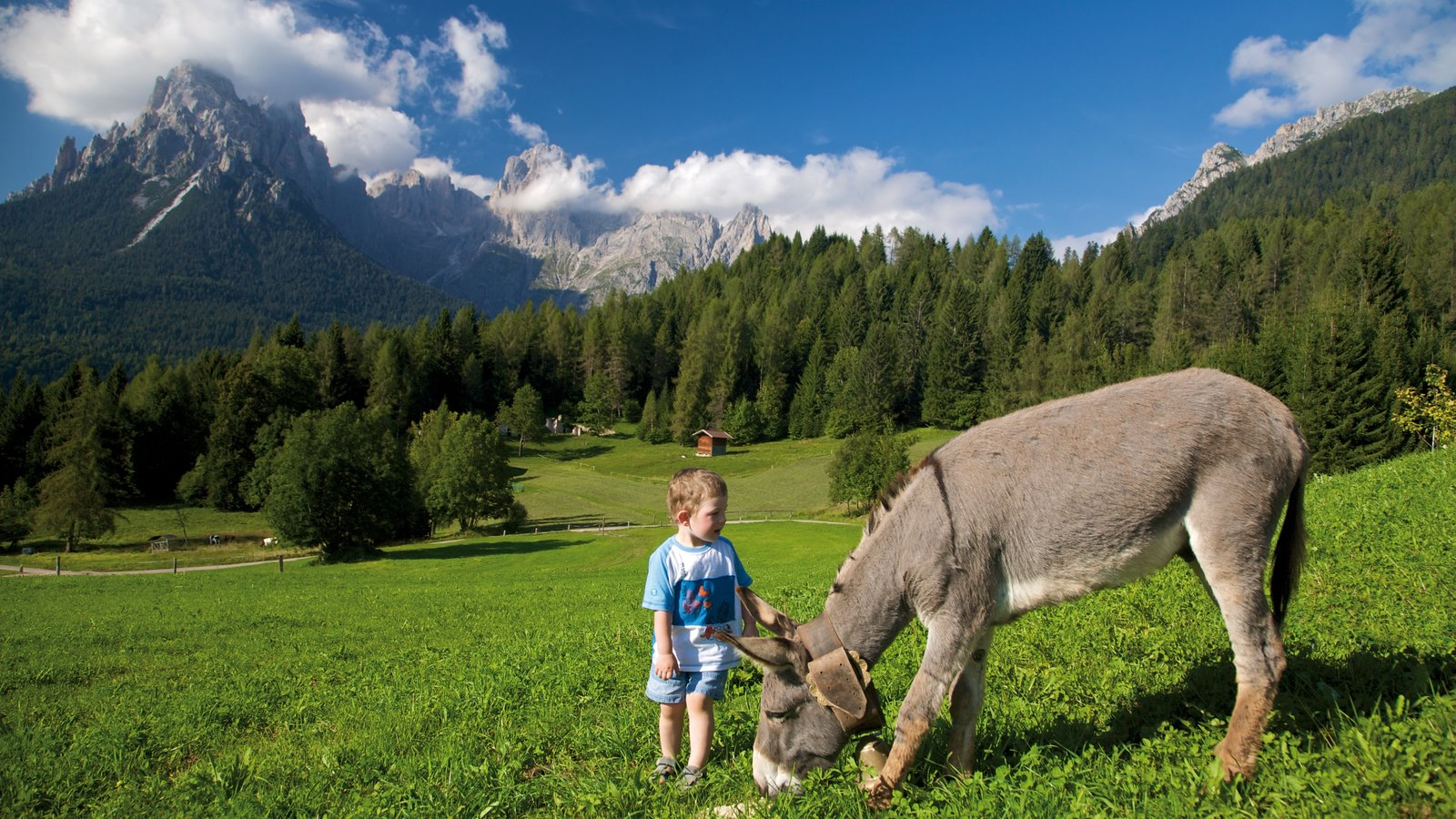 Trentino showing cuddly or friendly animals, forests and landscape views