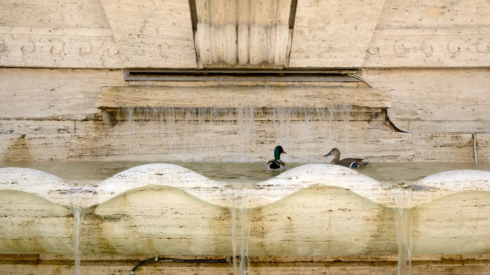 Prati featuring bird life, heritage architecture and a fountain