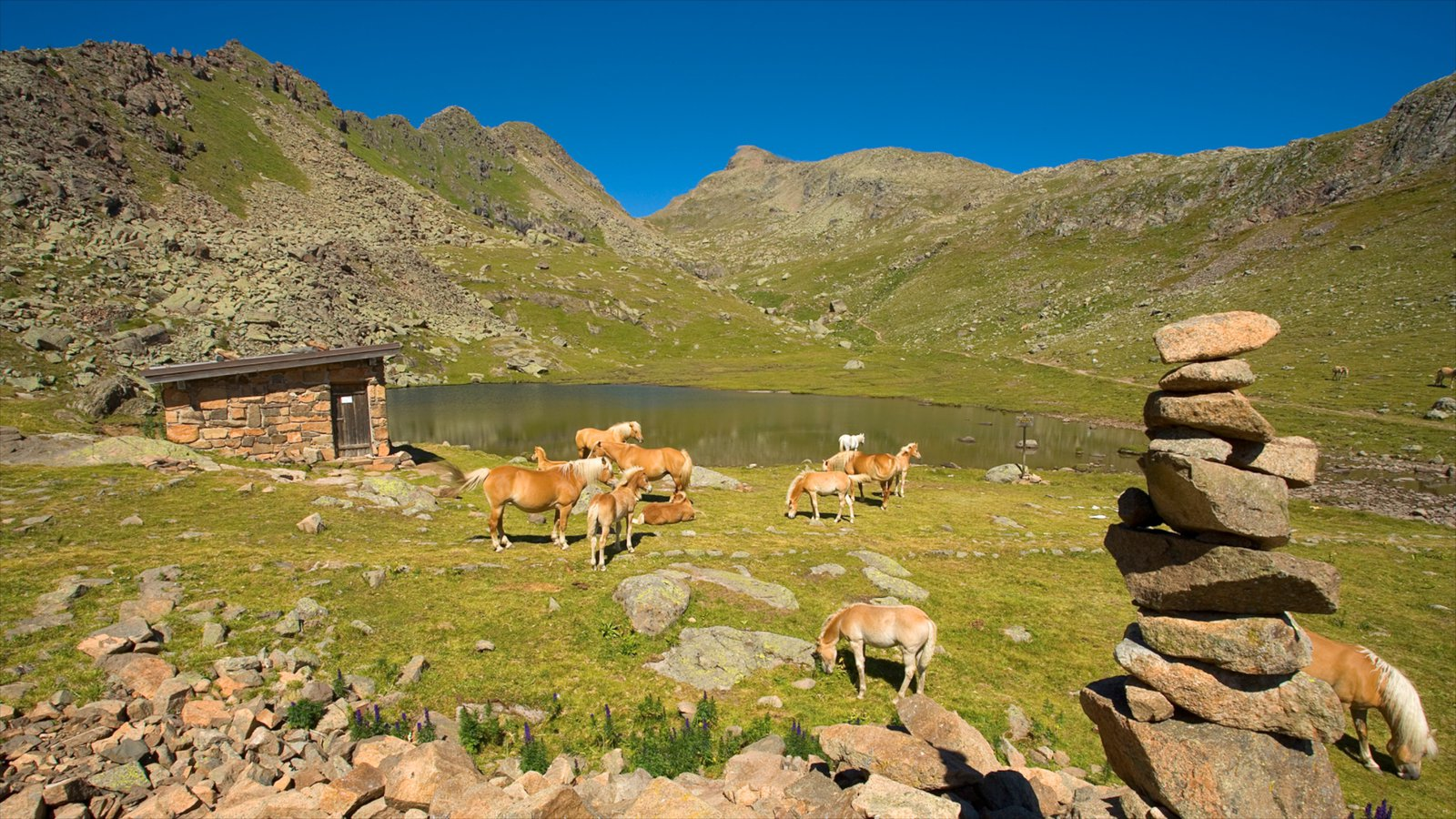Fassa Valley which includes tranquil scenes, land animals and a pond