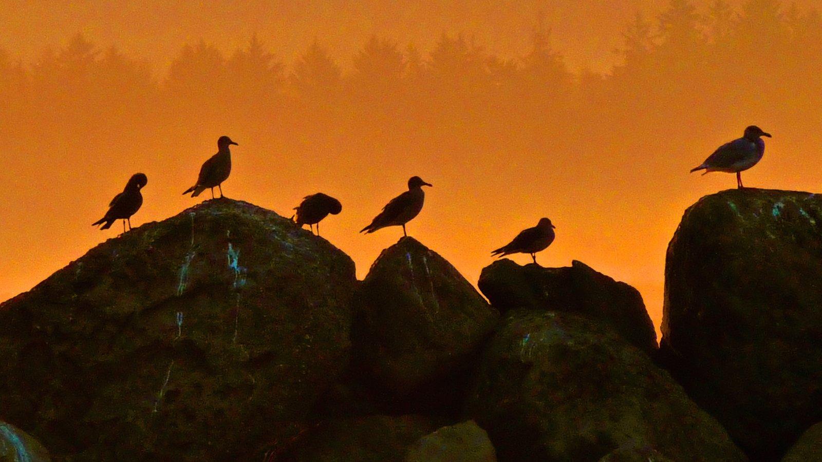 Washington mostrando una puesta de sol y vida de las aves