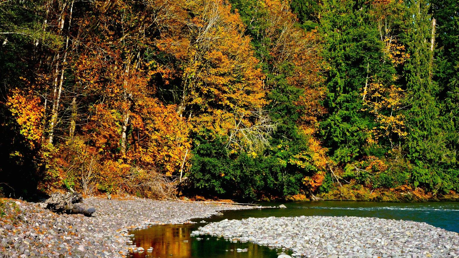 Washington que incluye una playa de guijarros, escenas forestales y hojas de otoño