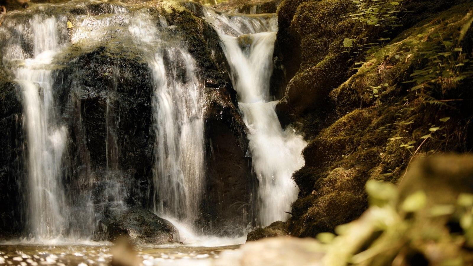Washington ofreciendo una cascada