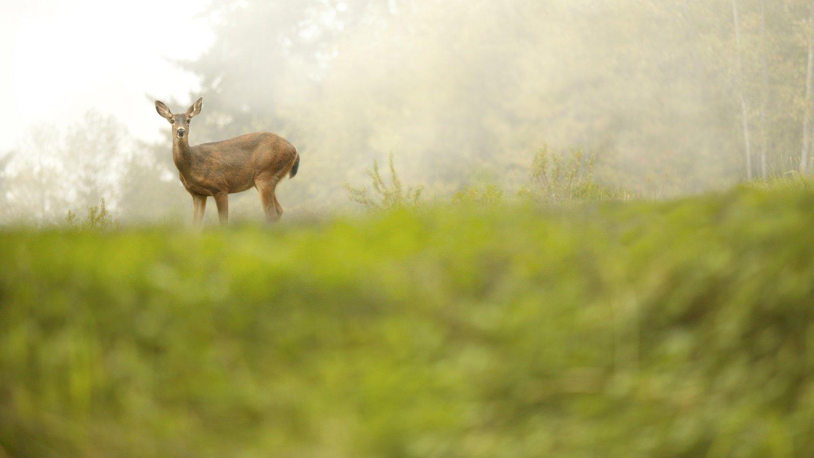 Washington ofreciendo animales terrestres