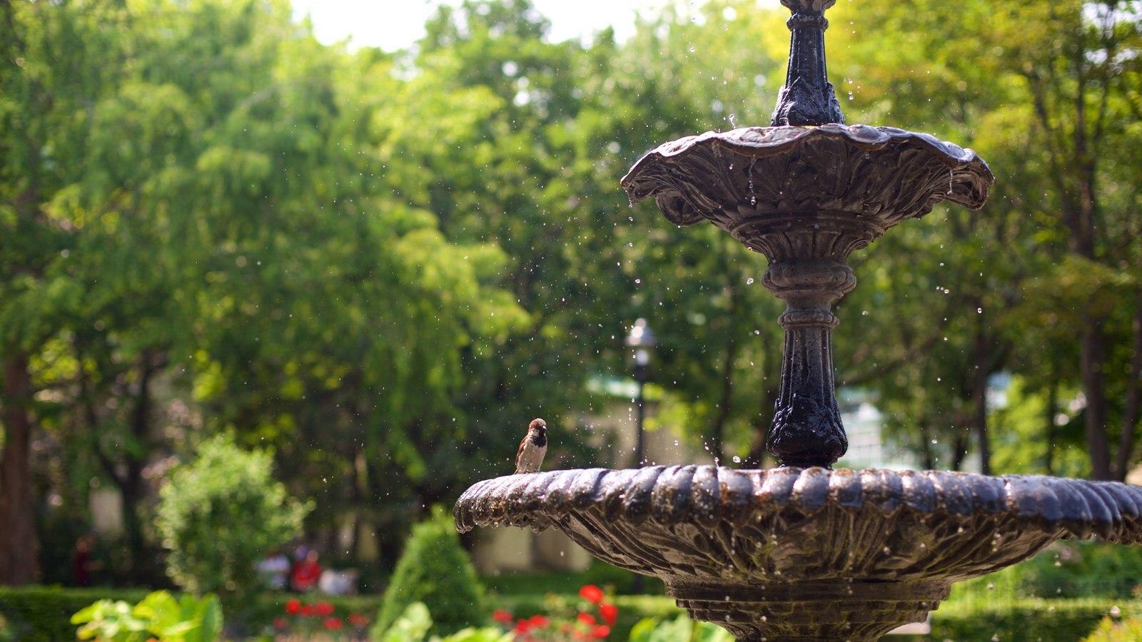 Old Town caracterizando um jardim, uma fonte e vida das aves