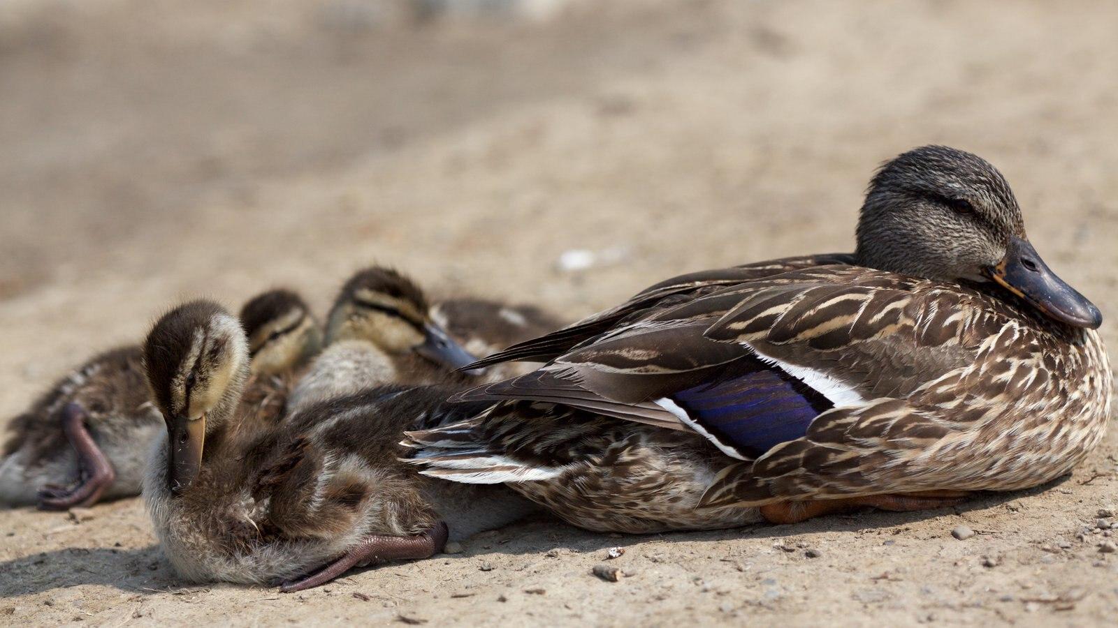 Brampton mostrando vida das aves e animais fofos ou amigáveis