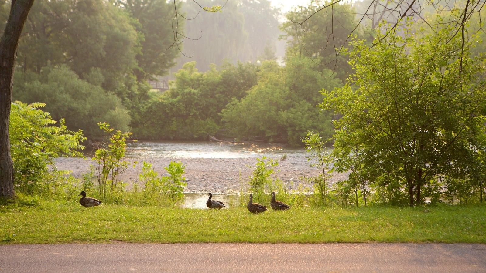 Etobicoke mostrando um rio ou córrego, vida das aves e um parque