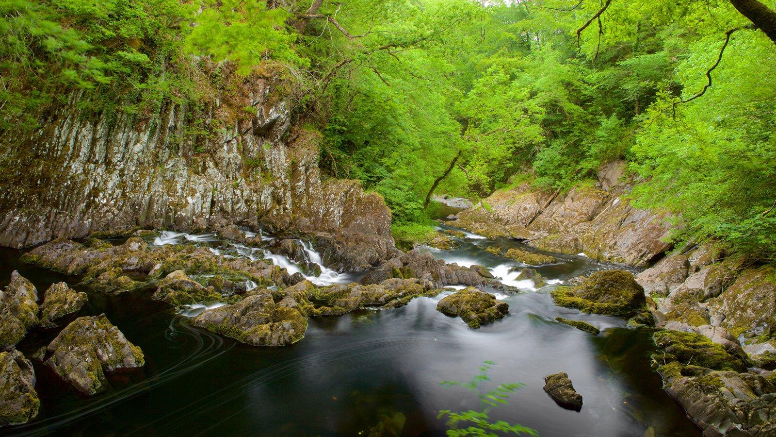 Swallow Falls mostrando un río o arroyo y bosques