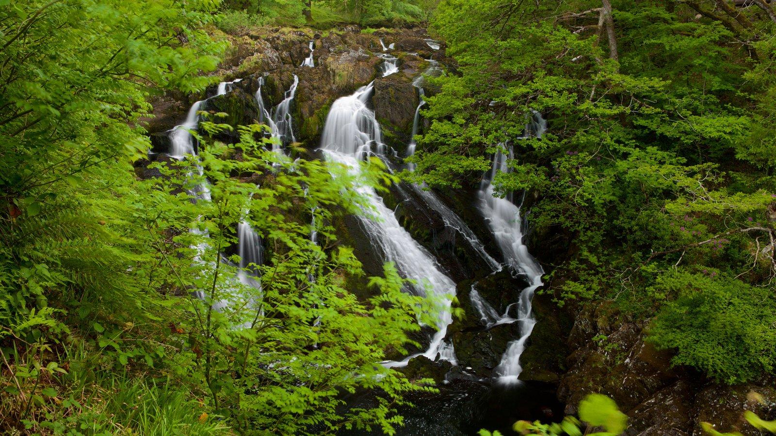 Swallow Falls ofreciendo selva y una catarata