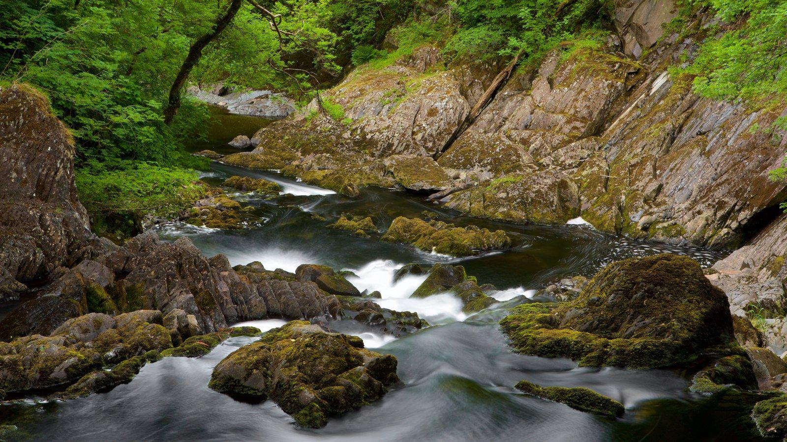 Swallow Falls que incluye un río o arroyo y rápidos