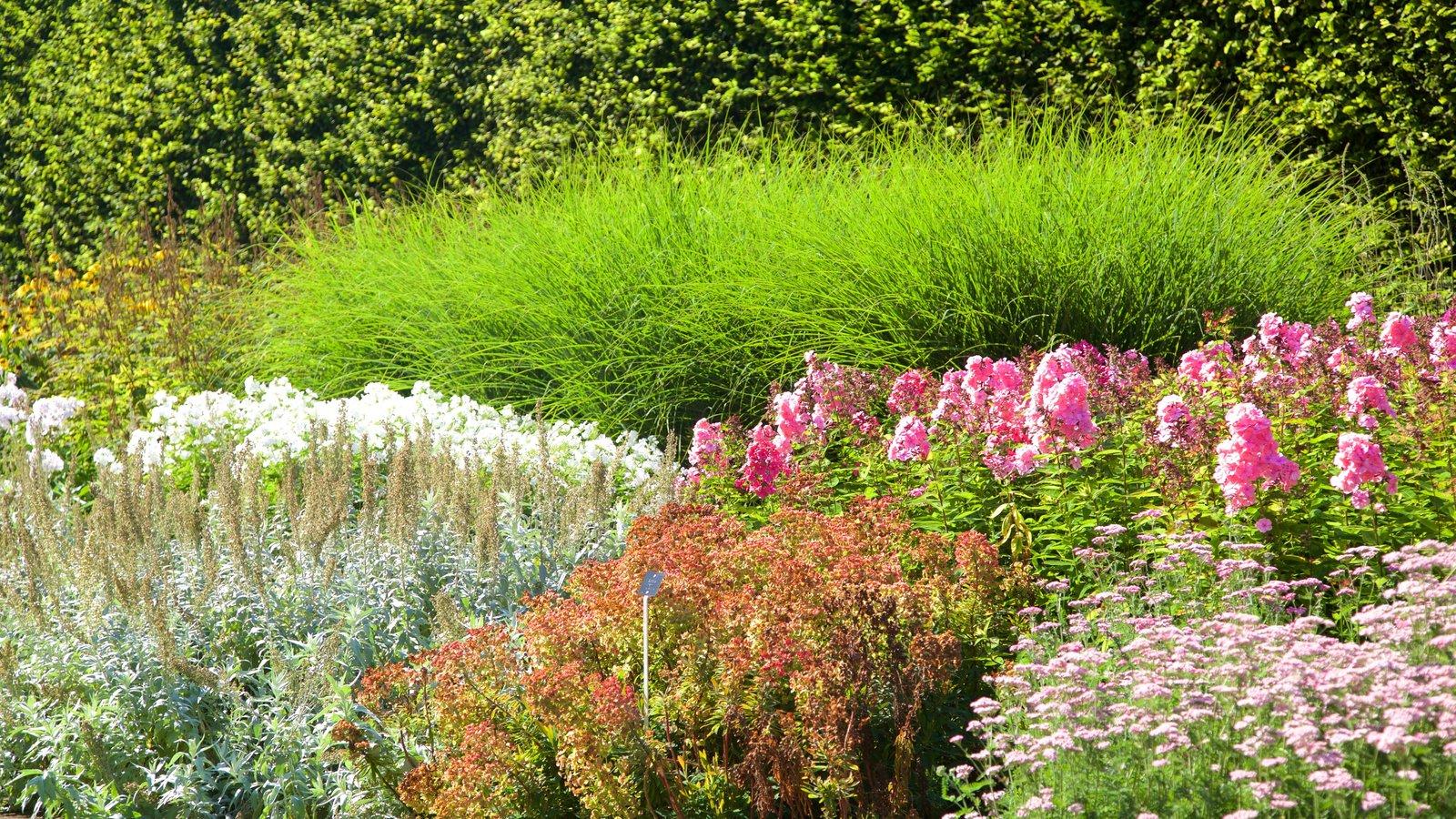 Real Jardín Botánico que incluye un jardín y flores silvestres
