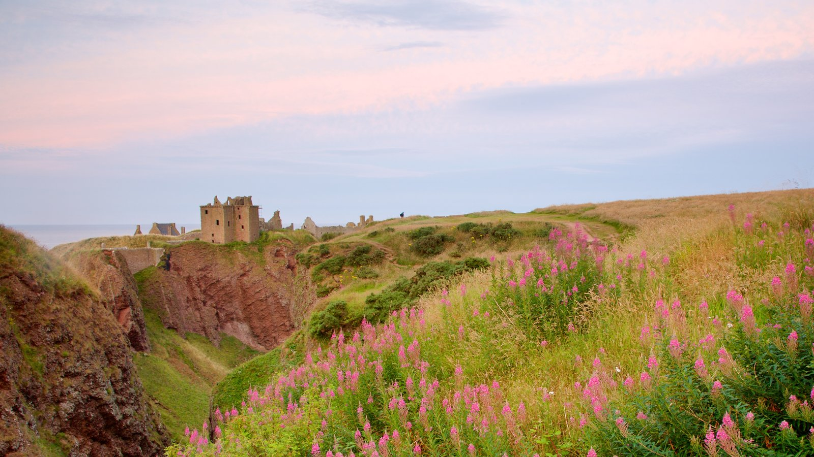 Dunnottar Castle showing farmland and wildflowers