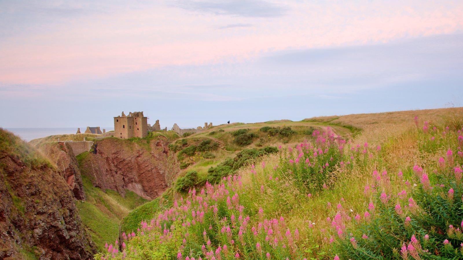 Dunnottar Castle que incluye flores silvestres y tierras de cultivo