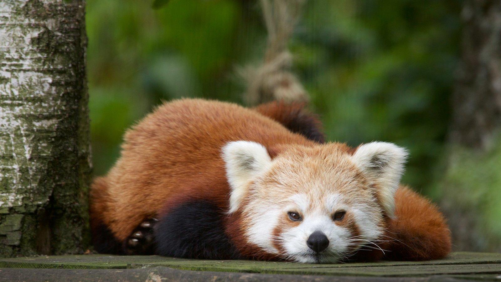 Highland Wildlife Park which includes cuddly or friendly animals