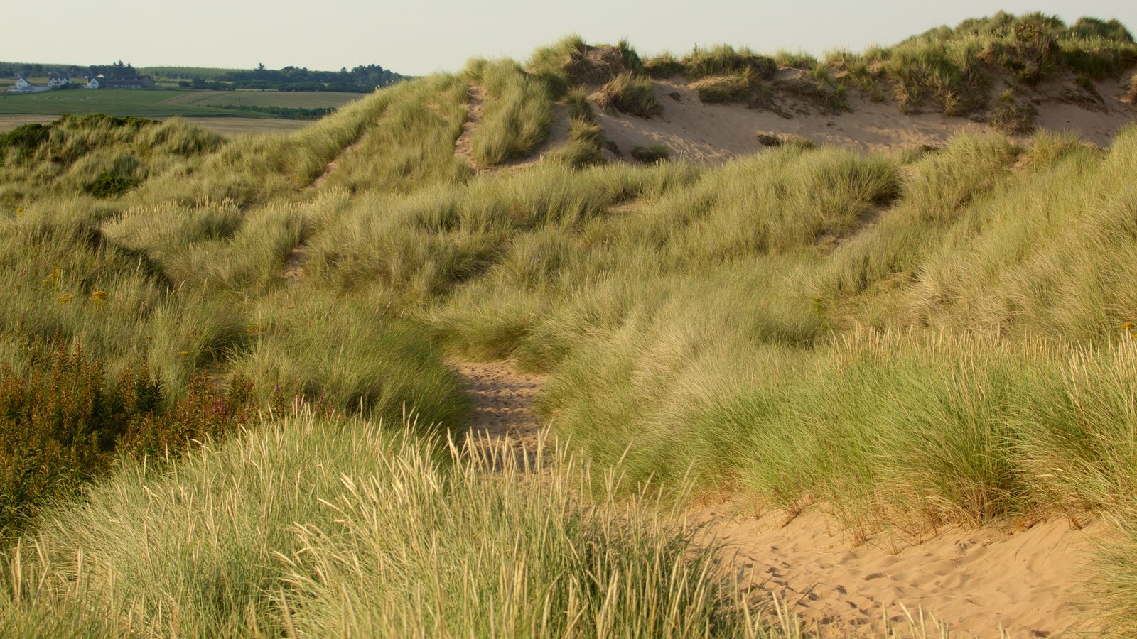 Balmedie Country Park which includes a beach