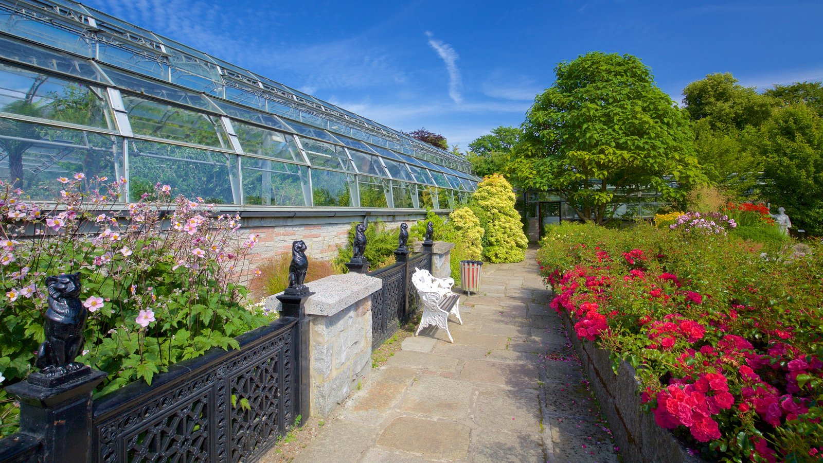 Duthie Park Winter Gardens which includes wild flowers, a park and flowers