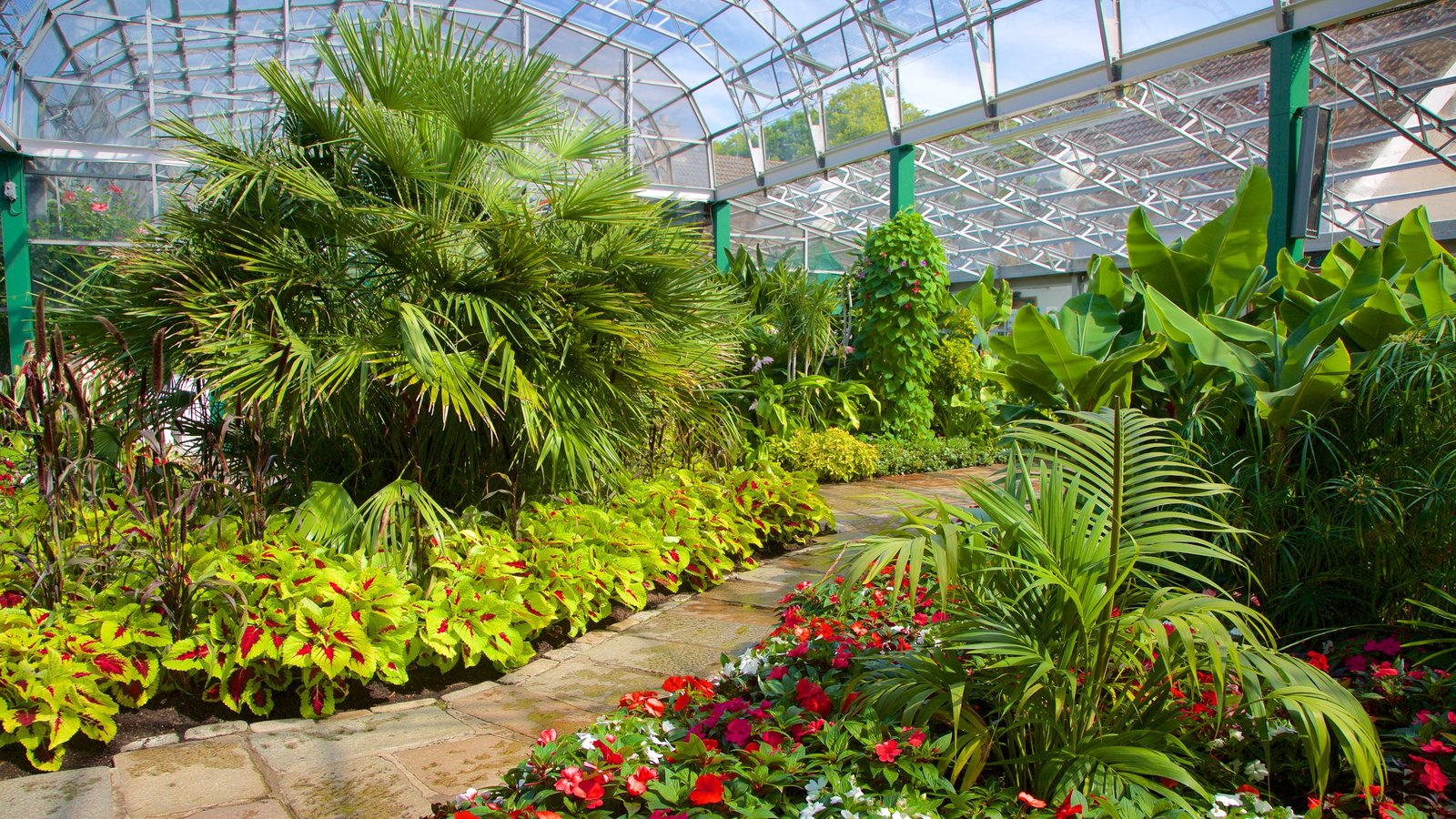Duthie Park Winter Gardens showing interior views and a park