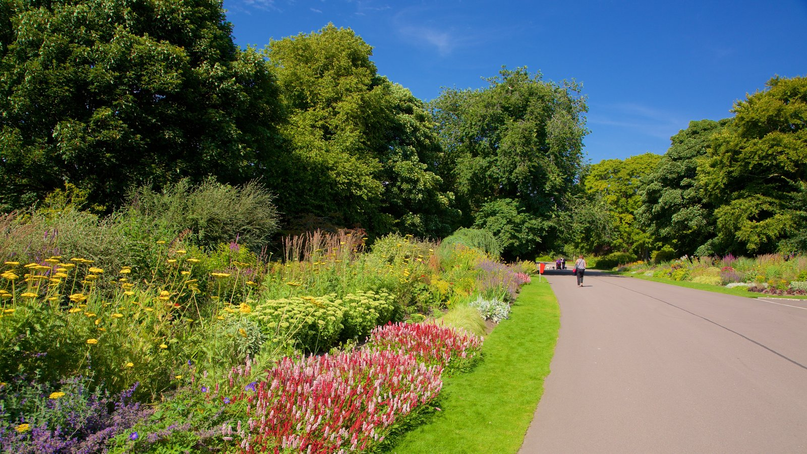 Duthie Park Winter Gardens featuring flowers, wild flowers and a park