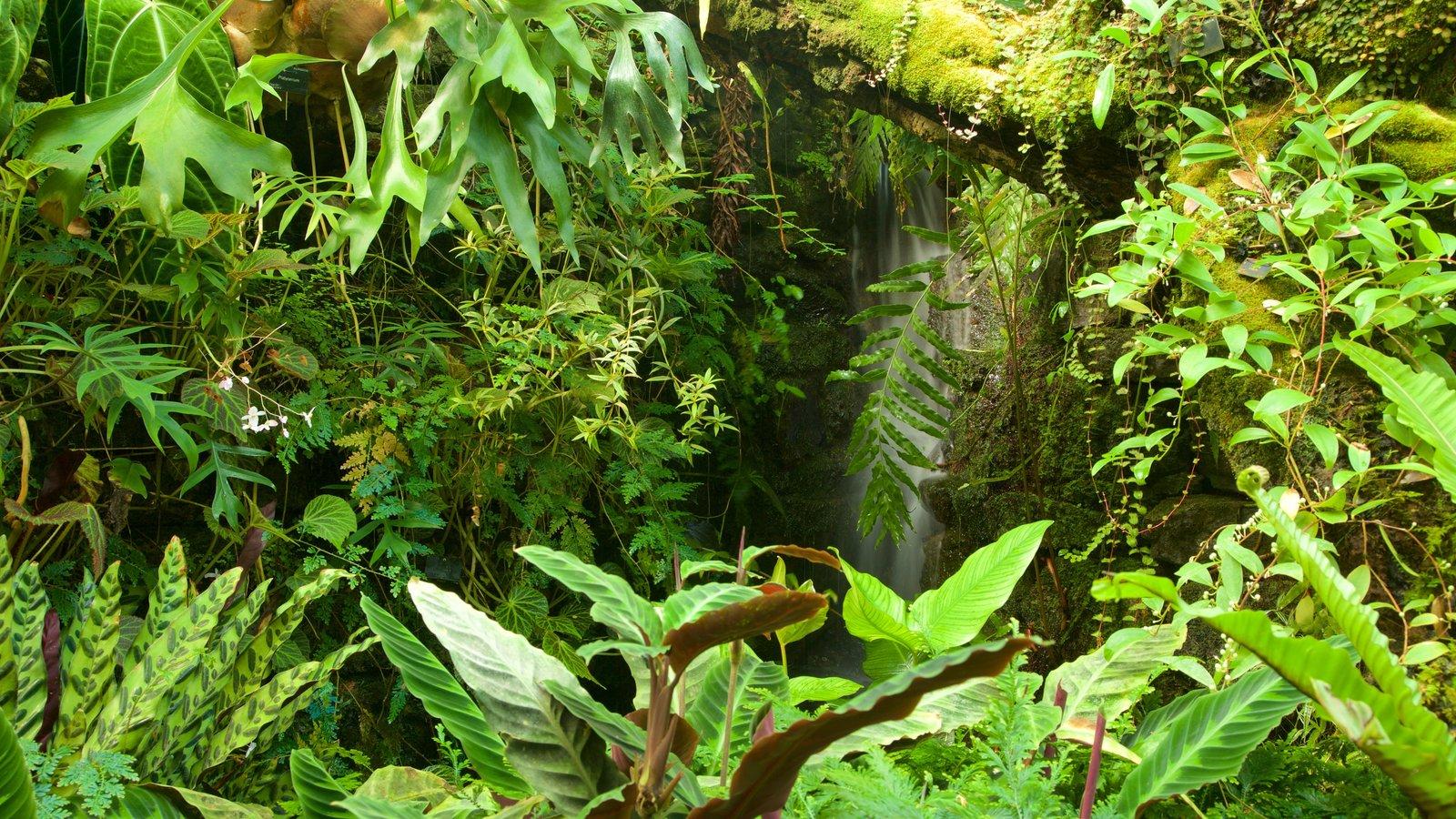 Real Jardín Botánico mostrando escenas tropicales y un parque