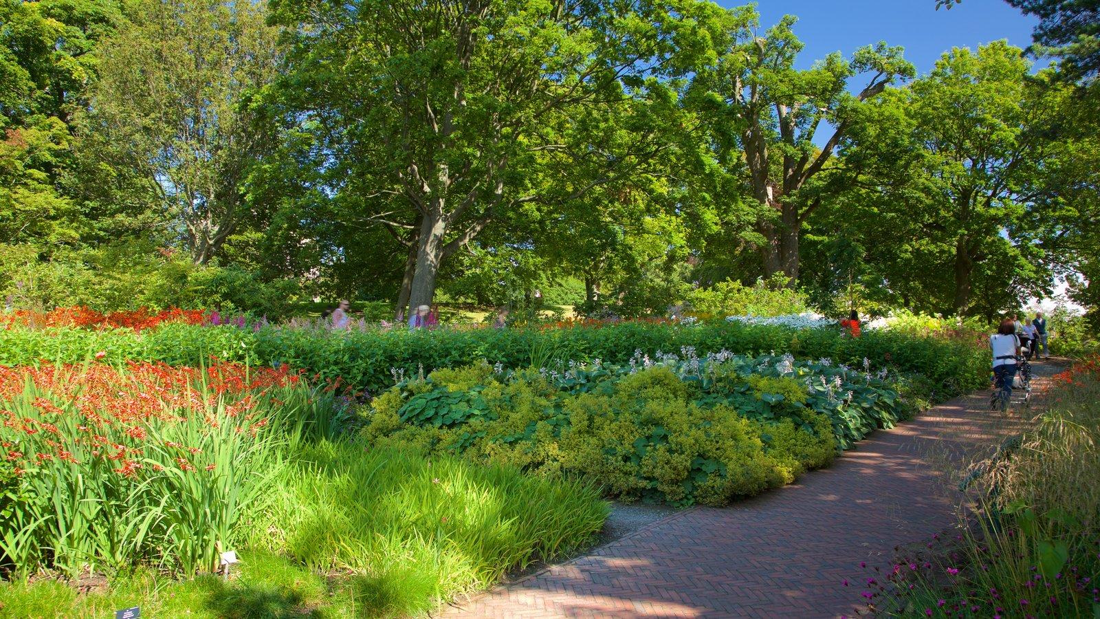 Real Jardín Botánico ofreciendo un jardín