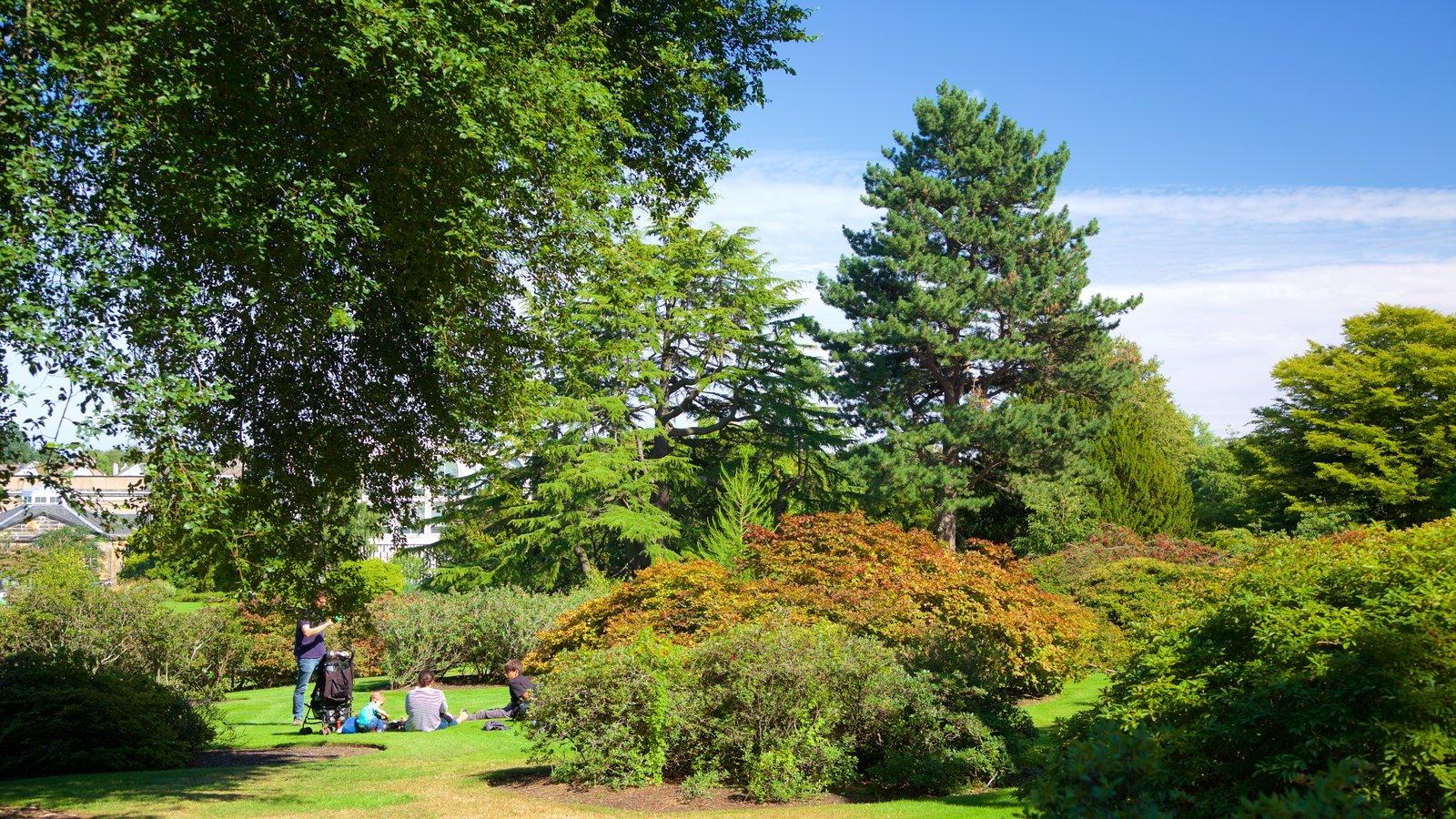 Real Jardín Botánico mostrando un jardín