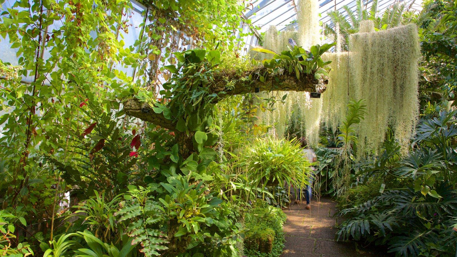 Real Jardín Botánico mostrando vistas interiores, un parque y escenas tropicales