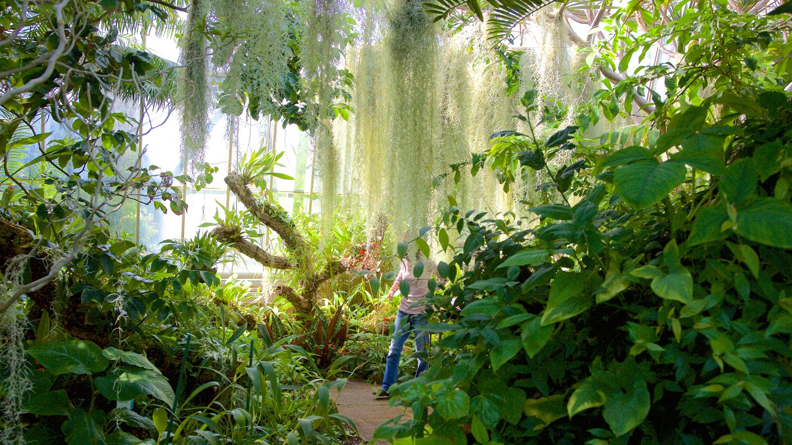 Real Jardín Botánico mostrando vistas interiores, escenas tropicales y un parque