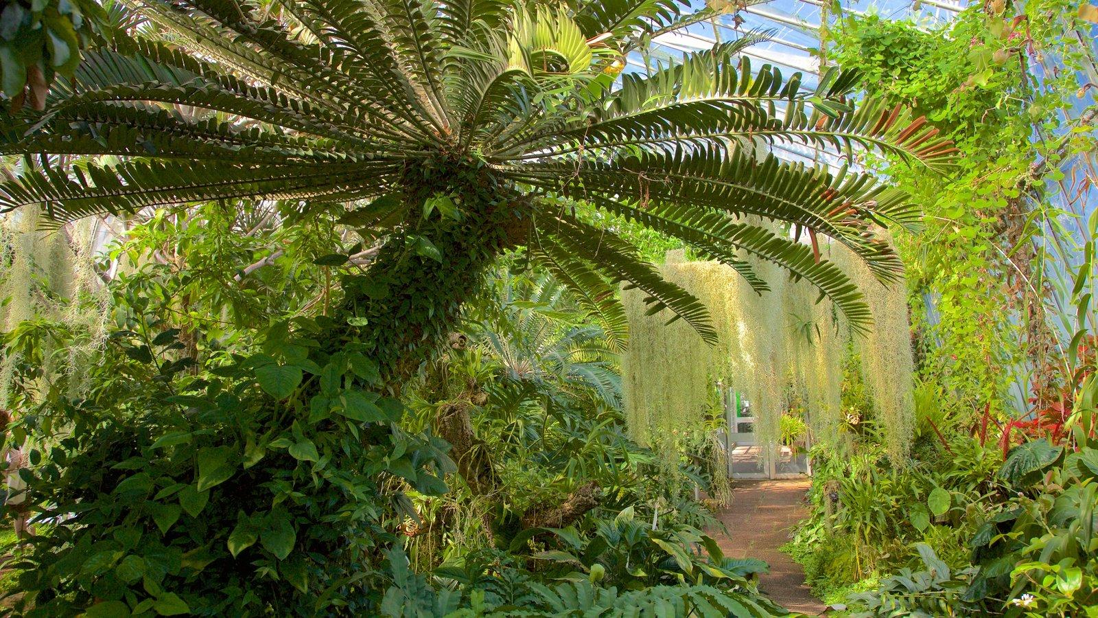 Real Jardín Botánico mostrando vistas interiores, un jardín y escenas tropicales
