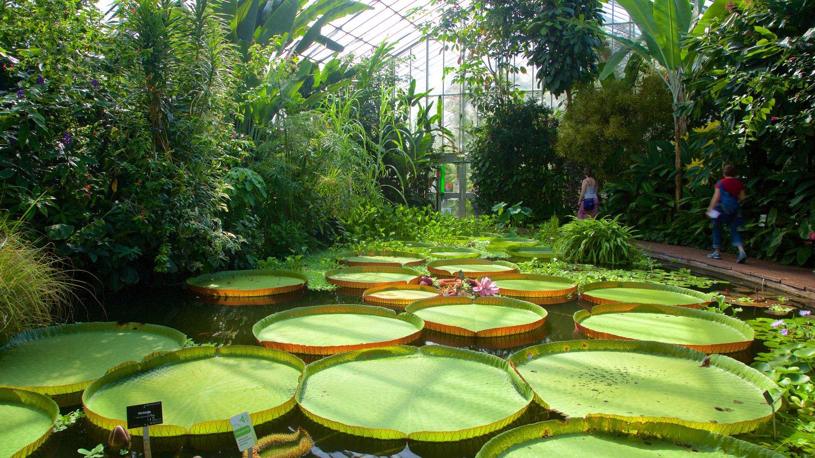 Real Jardín Botánico ofreciendo escenas tropicales, vistas interiores y un jardín