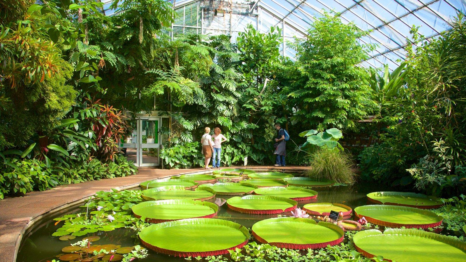 Real Jardín Botánico ofreciendo vistas interiores, un jardín y escenas tropicales