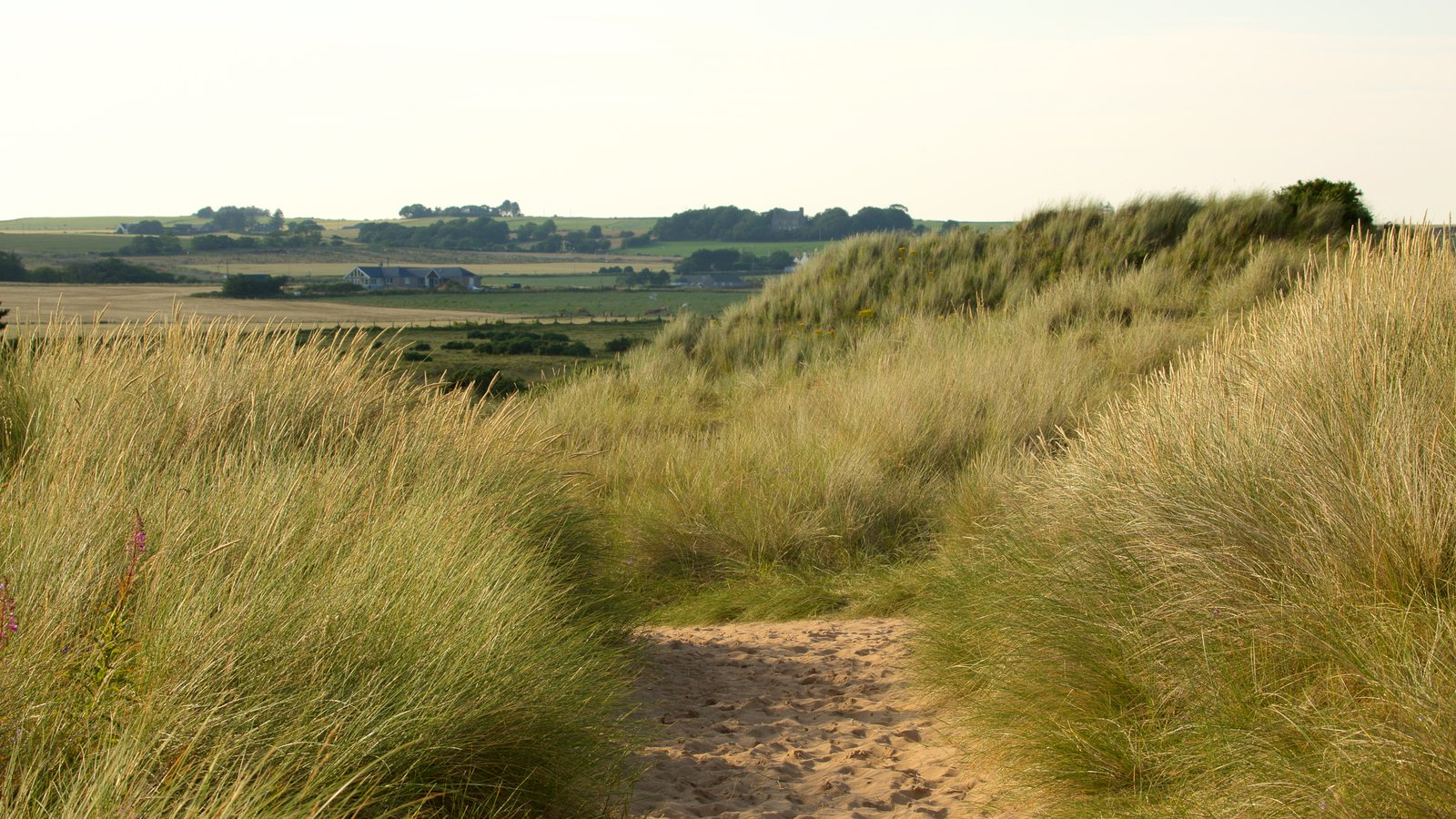 Balmedie Country Park showing a beach