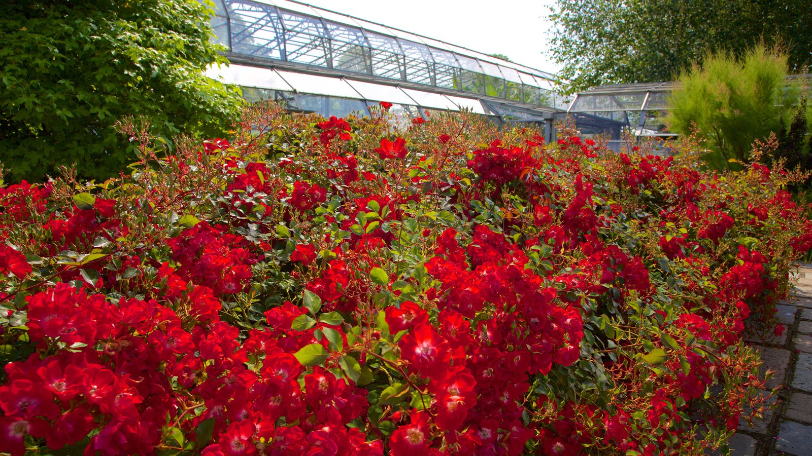 Duthie Park Winter Gardens which includes a park, flowers and wild flowers