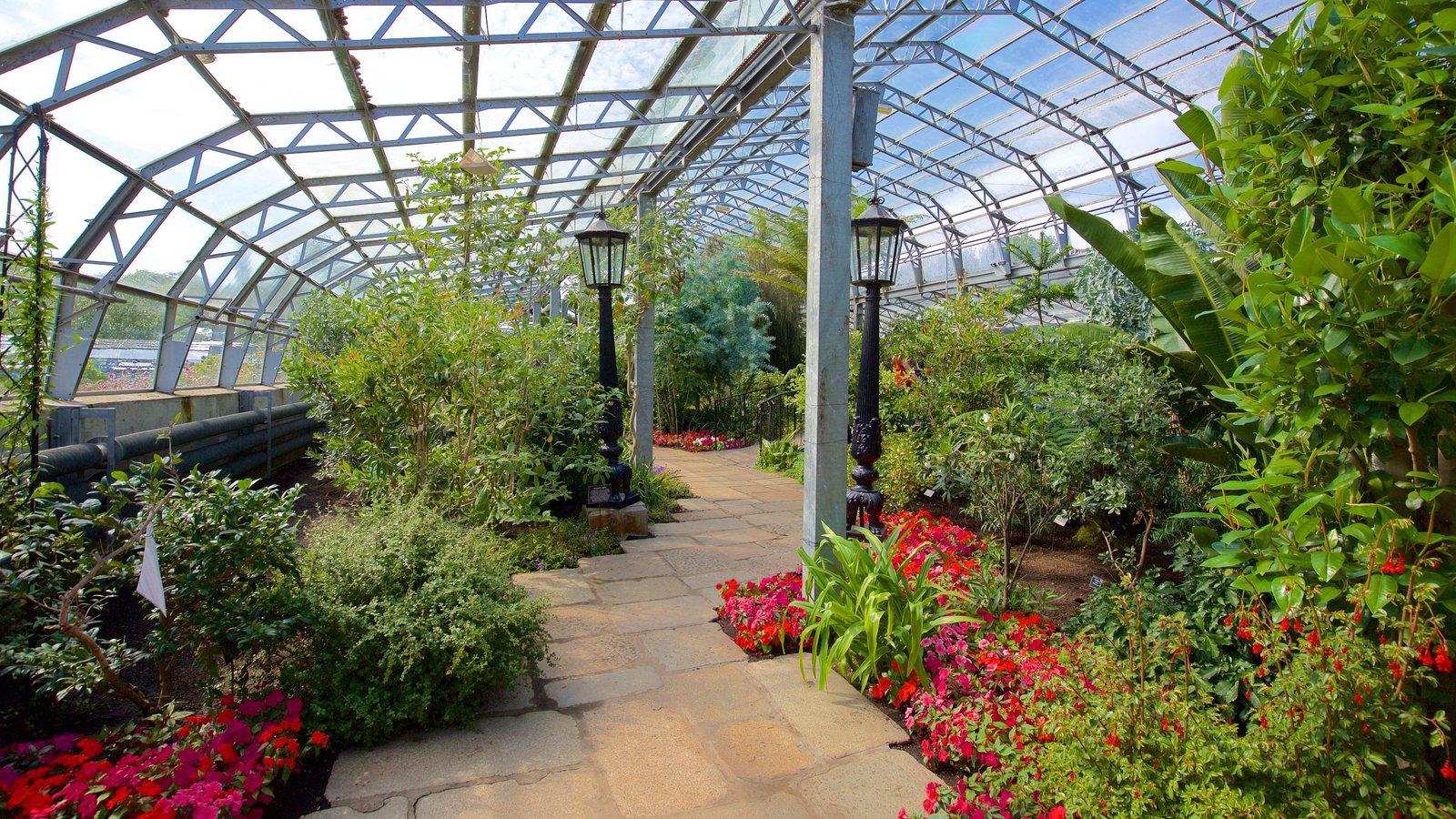 Duthie Park Winter Gardens mostrando un jardín y vistas interiores