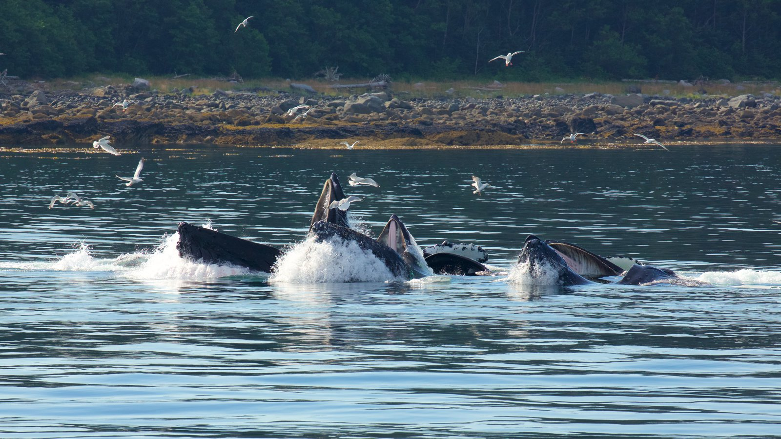 Southeast Alaska - Inside Passage which includes marine life, bird life and general coastal views