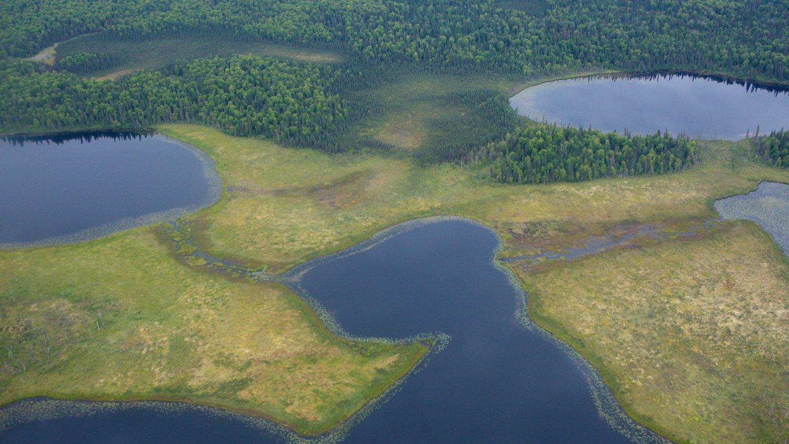Anchorage que incluye escenas forestales y un lago o abrevadero