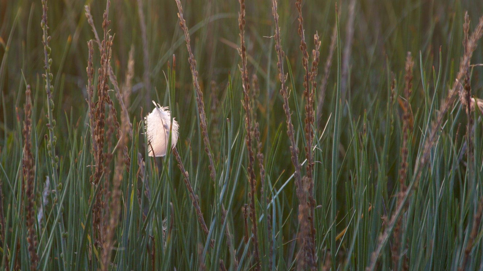Anchorage que incluye flores silvestres
