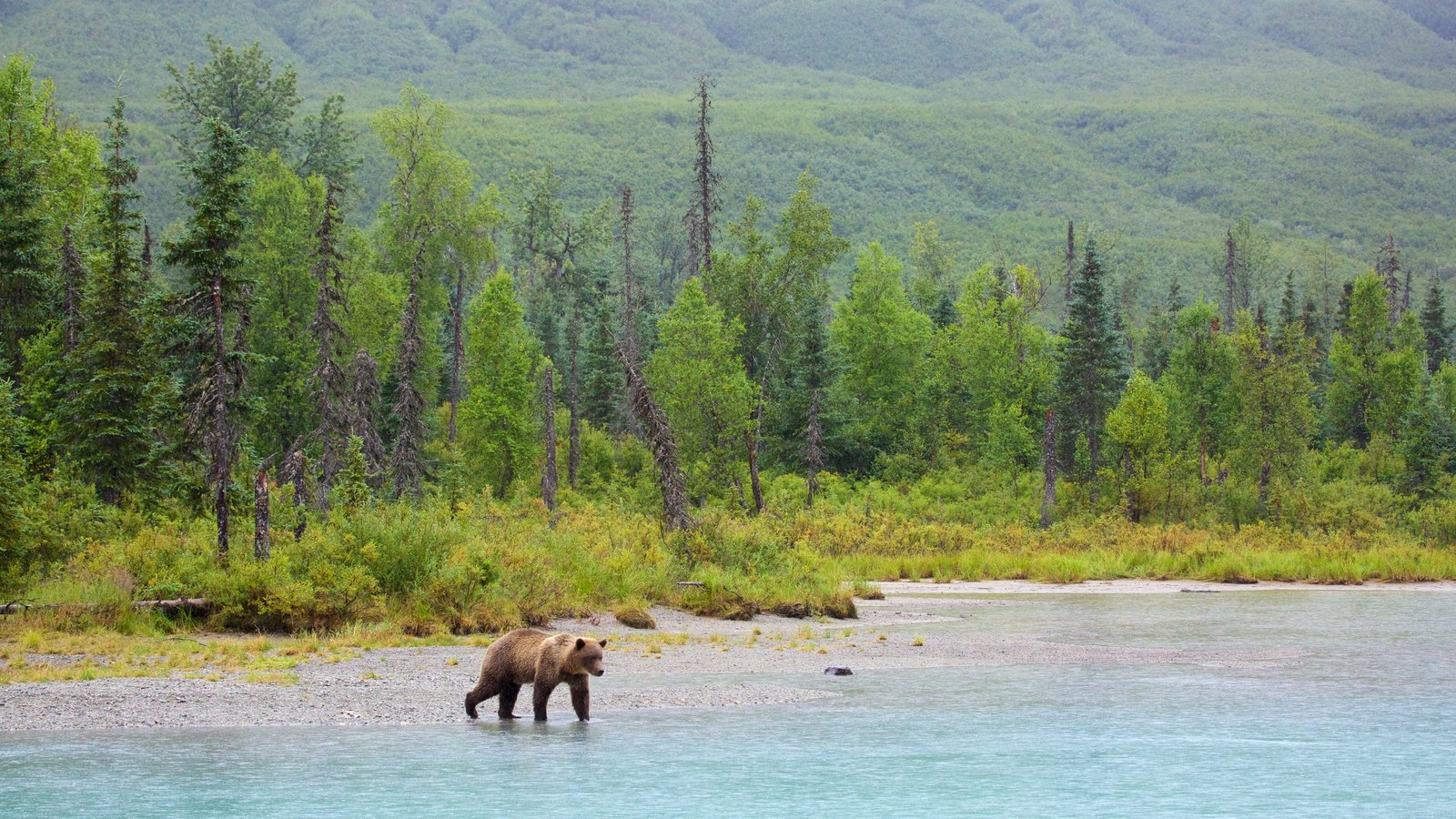 Lake Clark National Park and Preserve which includes general coastal views, dangerous animals and forest scenes
