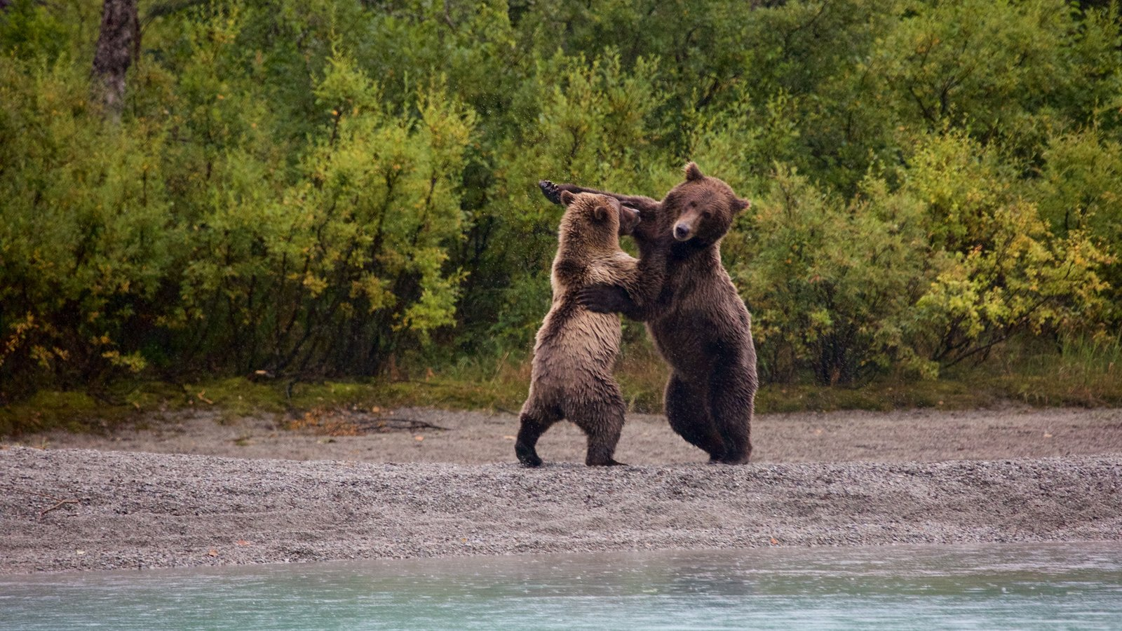 Lake Clark National Park and Preserve featuring dangerous animals and forests