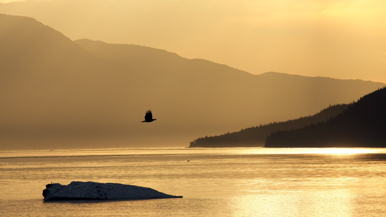 Southeast Alaska - Inside Passage which includes a sunset, a river or creek and bird life