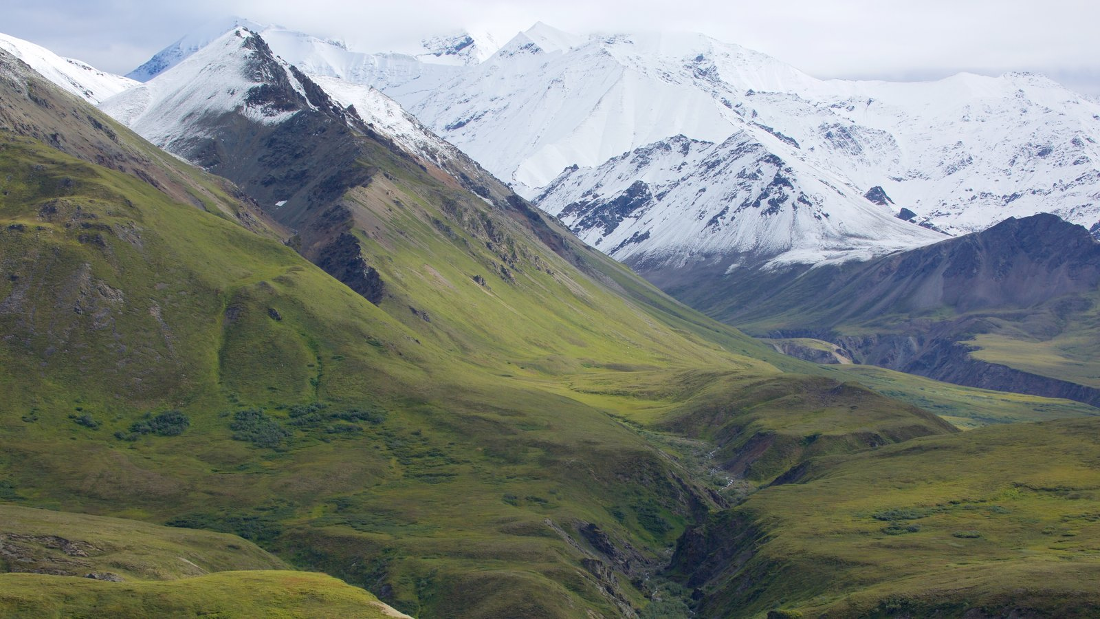 Denali National Park showing snow and mountains