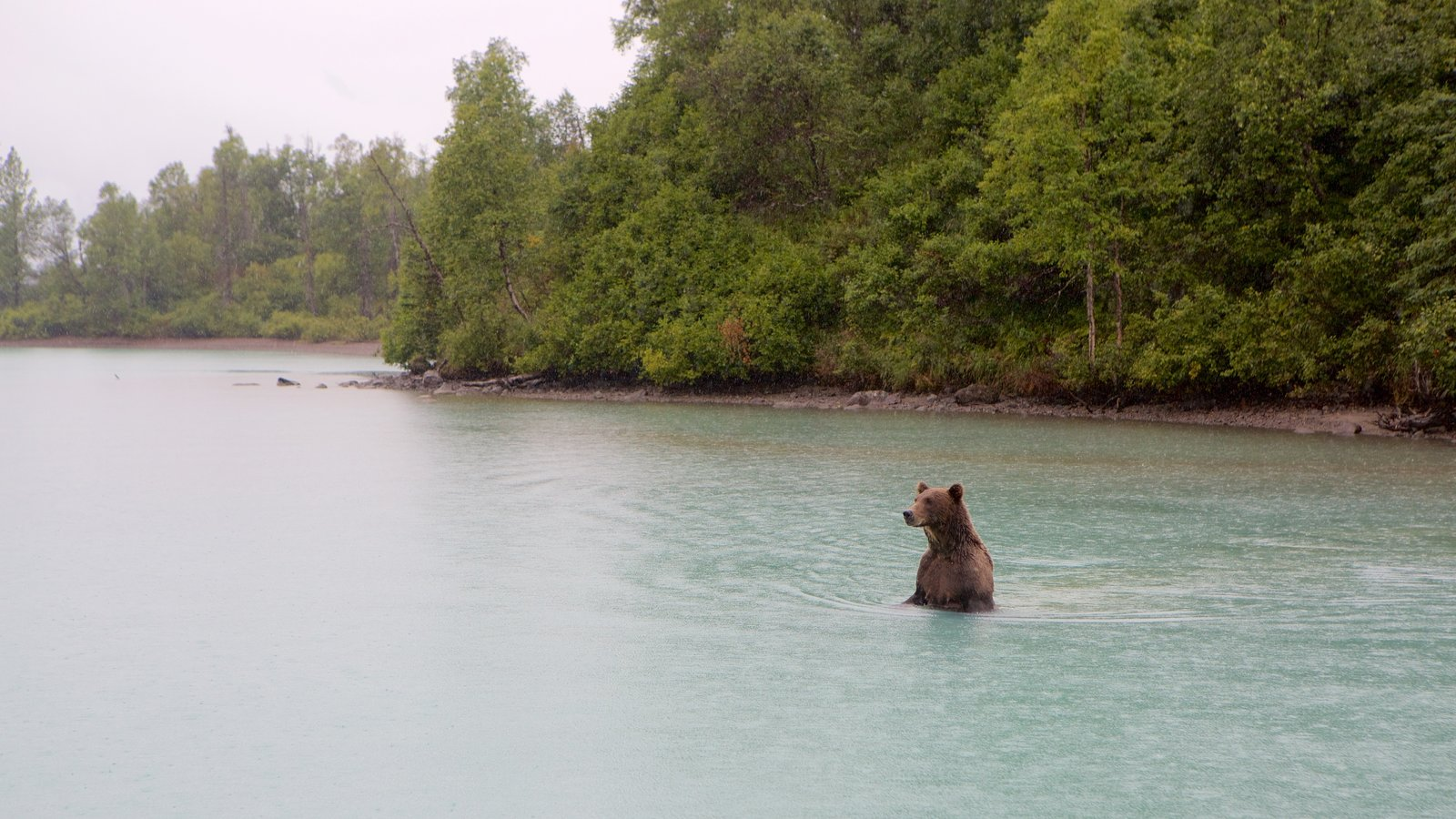 Lake Clark National Park and Preserve which includes dangerous animals, land animals and forest scenes