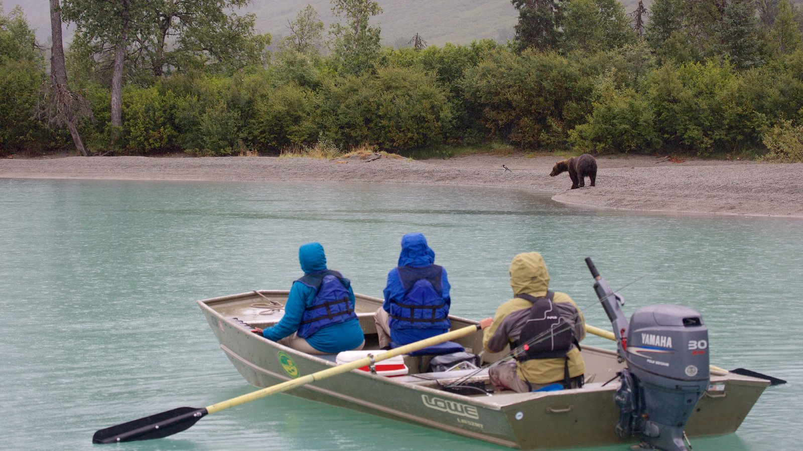 Lake Clark National Park and Preserve featuring dangerous animals, boating and land animals