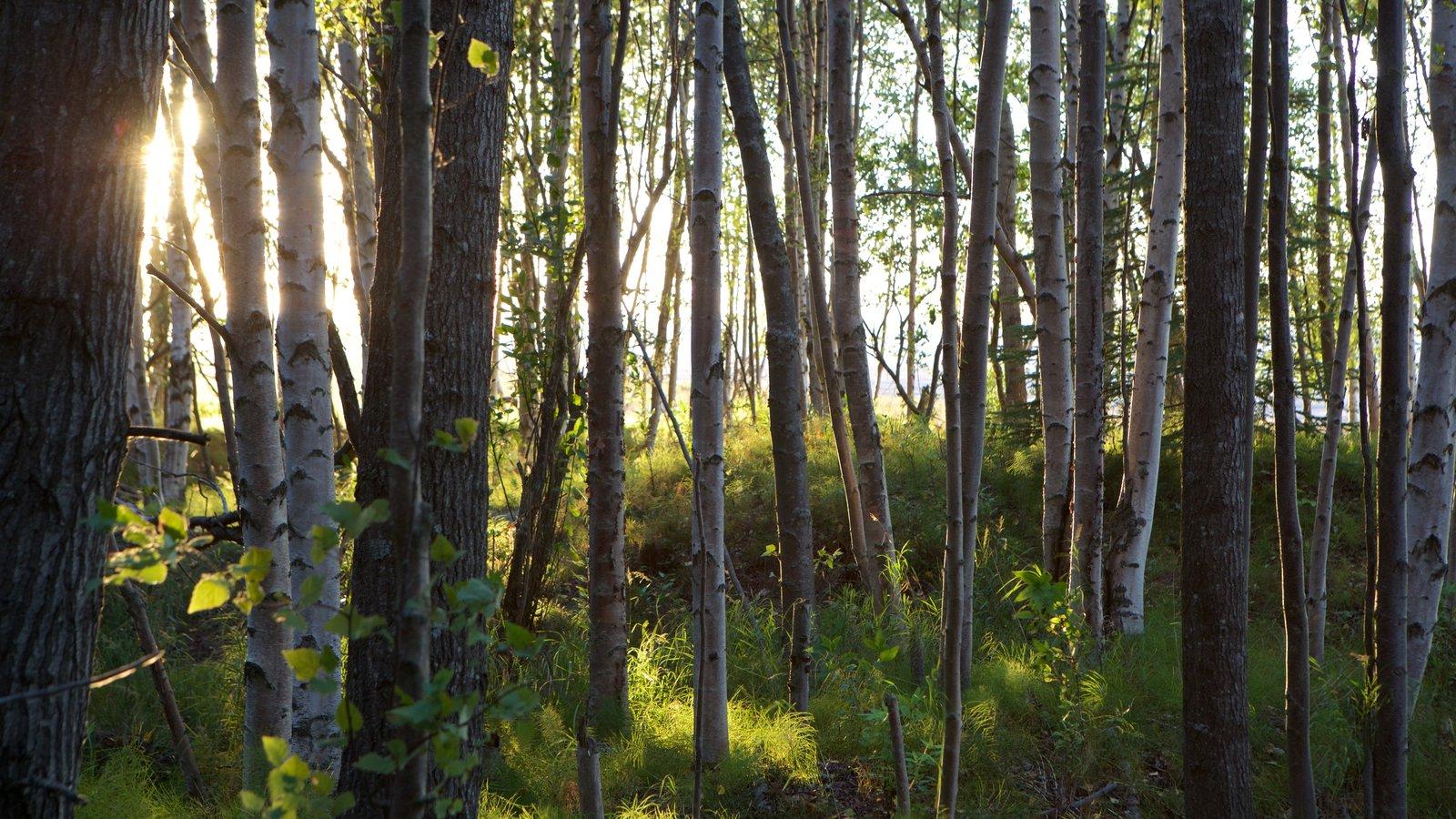Ruta costera Tony Knowles mostrando una puesta de sol y escenas forestales