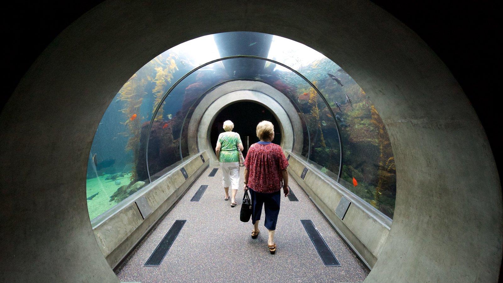 California Science Center caracterizando vida marinha e vistas internas