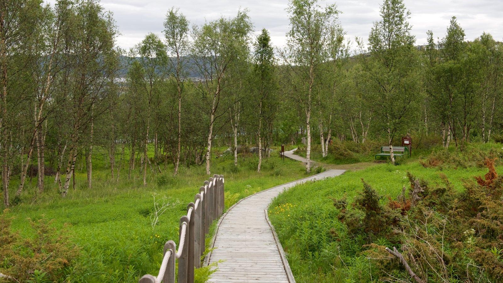 Alta Rock Carvings ofreciendo escenas forestales y un parque