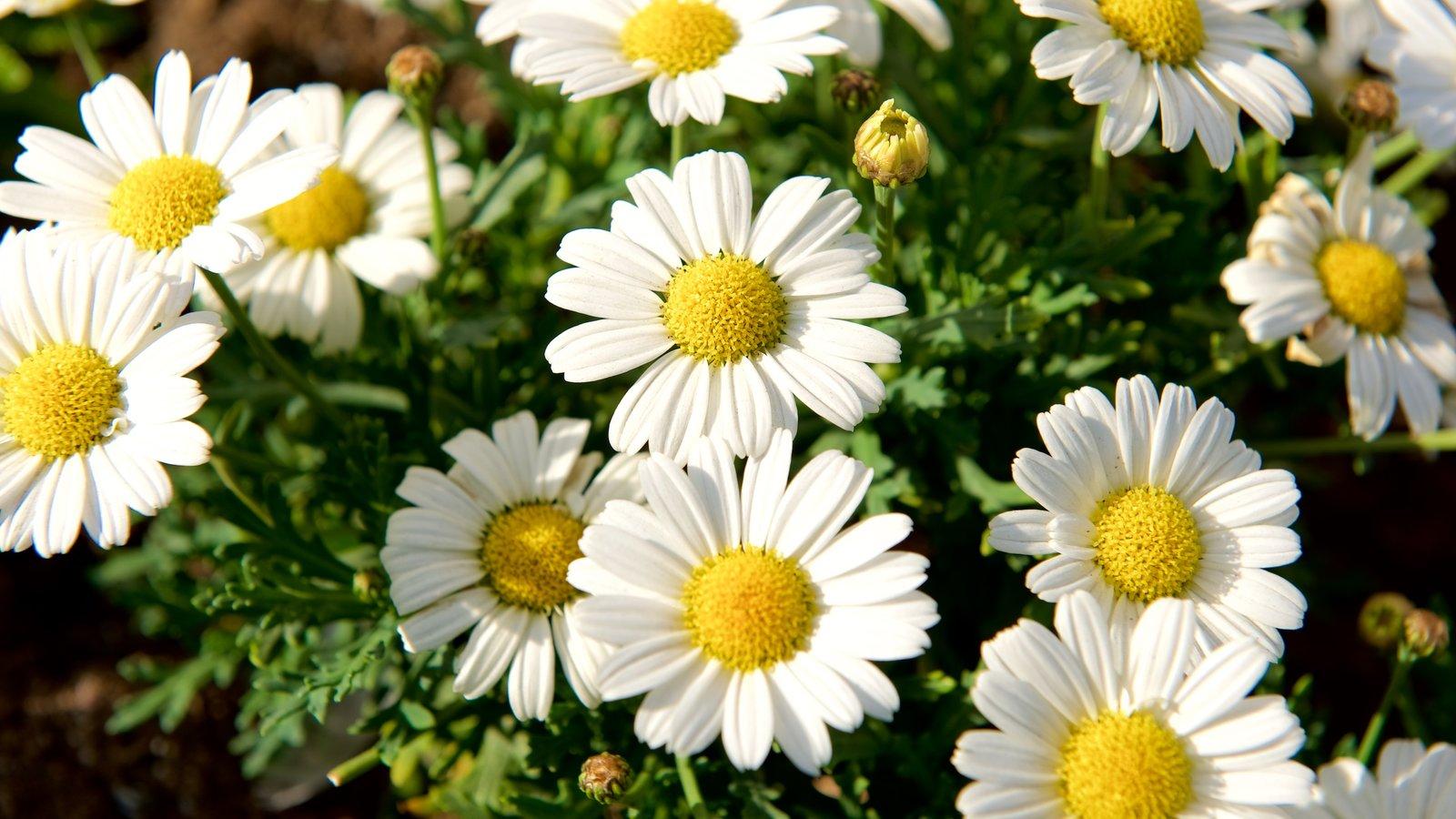 Tromso mostrando flores