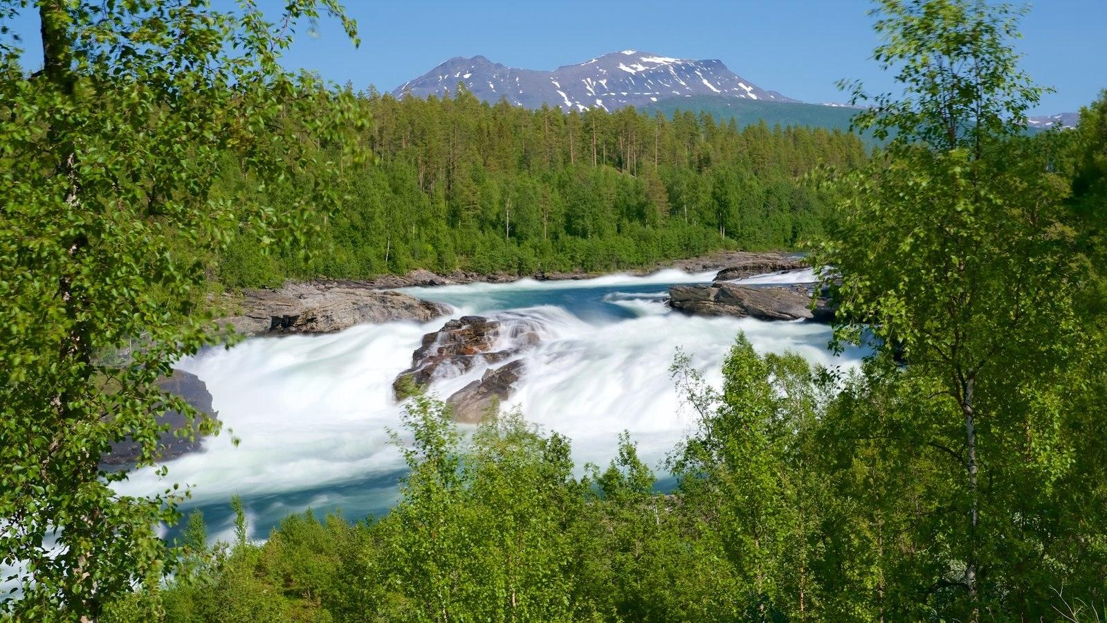 Maalselvfossen Waterfall showing forest scenes and rapids